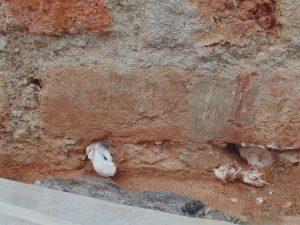 RISANAMURO barriera all'umidità su mattoni pieni