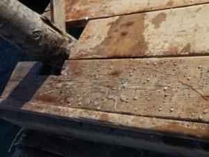 YDRO-CREAM idrorepellente silossanico in crema a base acqua per superfici porose per la protezione del legno